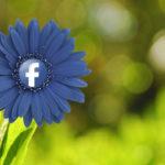 Facebook pořádá zajímavé prázdninové webináře